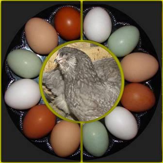 eieren in koelkast